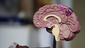 alzheimer ve defansa bağlı olarak beyinde meydana gelen değişiklikler
